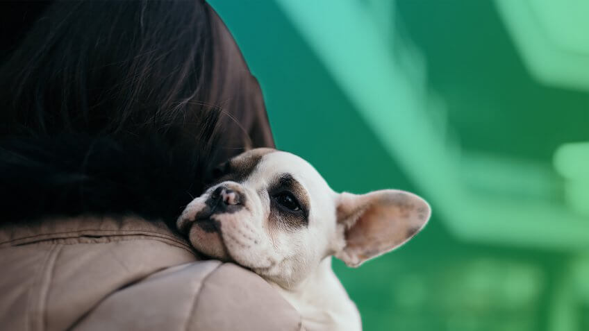 Buying a Dog vs. Having a Kid: A Cost Breakdown