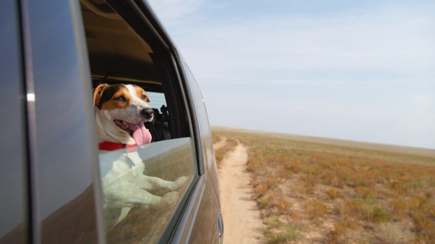 dog, pet, puppy, traveling