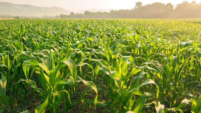 Iowa: Corn