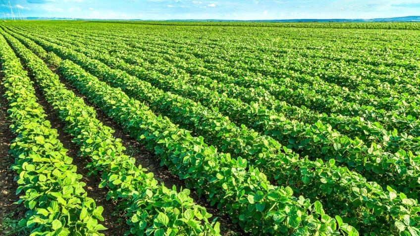 Louisiana: Soybeans