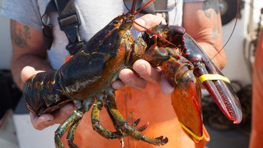 Maine: Lobster