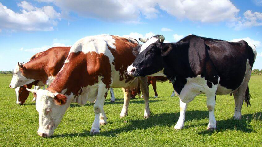 Nebraska: Beef