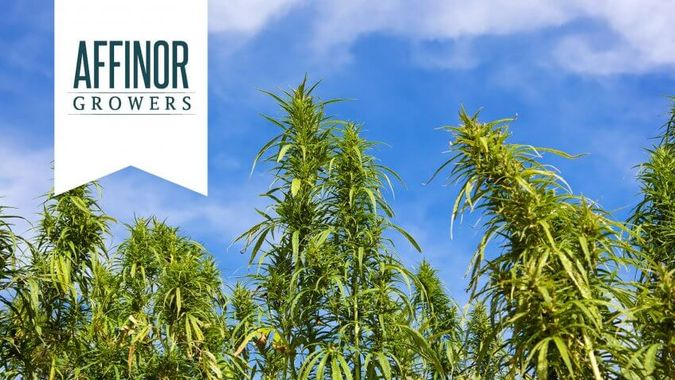 Affinor Growers: AFI (Canada) and RSSFF (US)