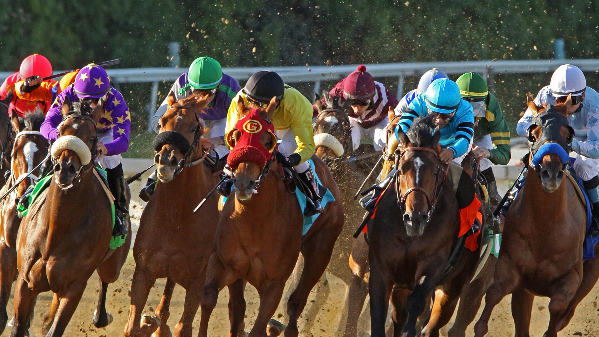 5 Horse Bet