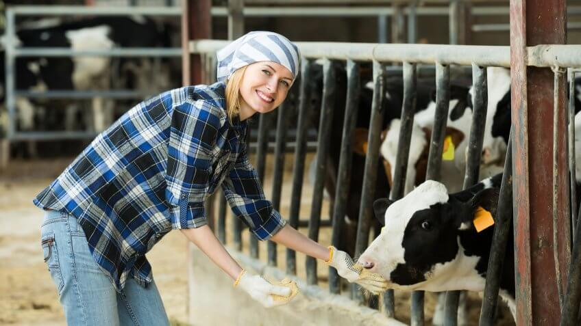 Livestock Artificial Insemination Technician