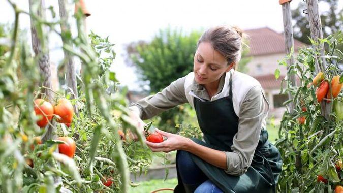 Grow Your Own Veggies