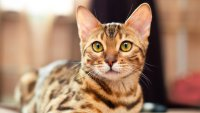 The Most and Least Expensive Cat Breeds in the World