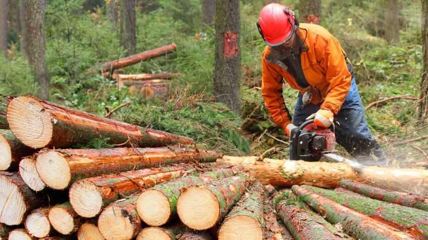 22 Industries That Pay Less (and More) Than They Did 10 Years Ag, The Lumberjack working in a forest.