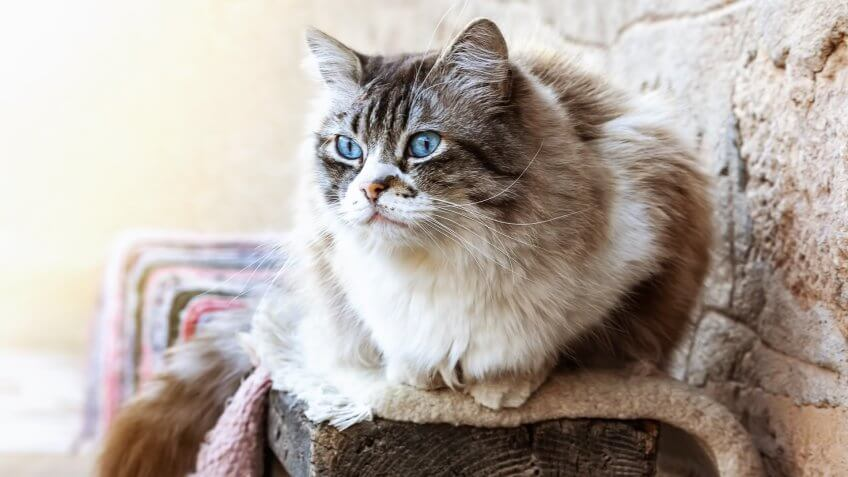 The Cheapest and Most Expensive Cat Breeds | GOBankingRates