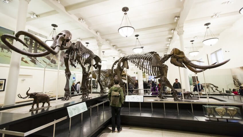 Museum Of Natural History Ticket Cost