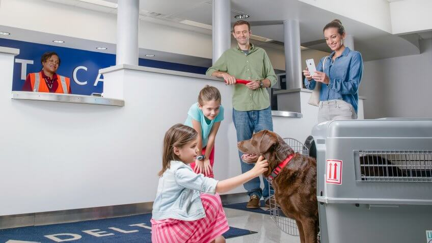 The 10 most affordable pet friendly airlines gobankingrates for Delta airlines dogs in cabin