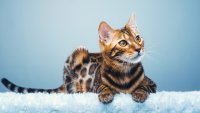 The Most Expensive Pets You Can Own