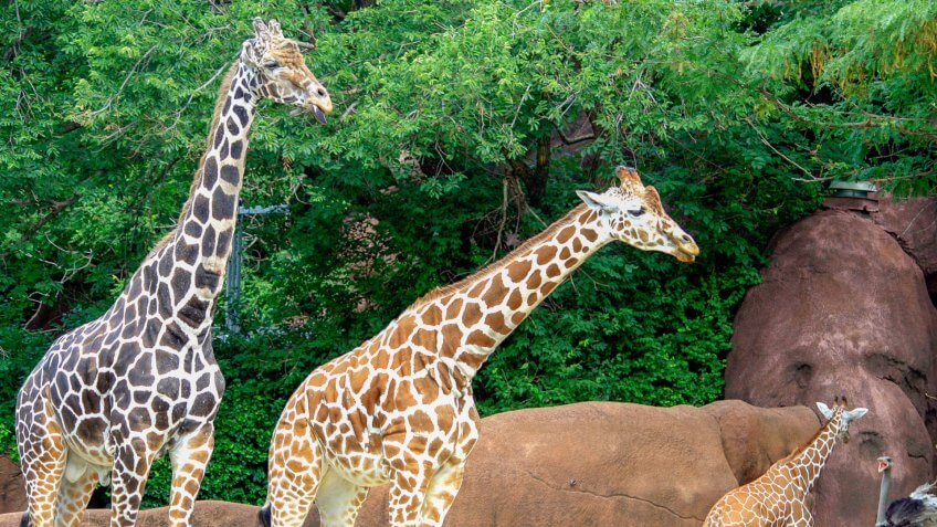 11662, Horizontal, St. Louis Zoo 2011