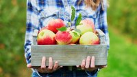 The Ultimate Guide to Budget-Friendly Fall Festivities