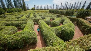 Your Cost to Visit the Coolest Mazes in the World