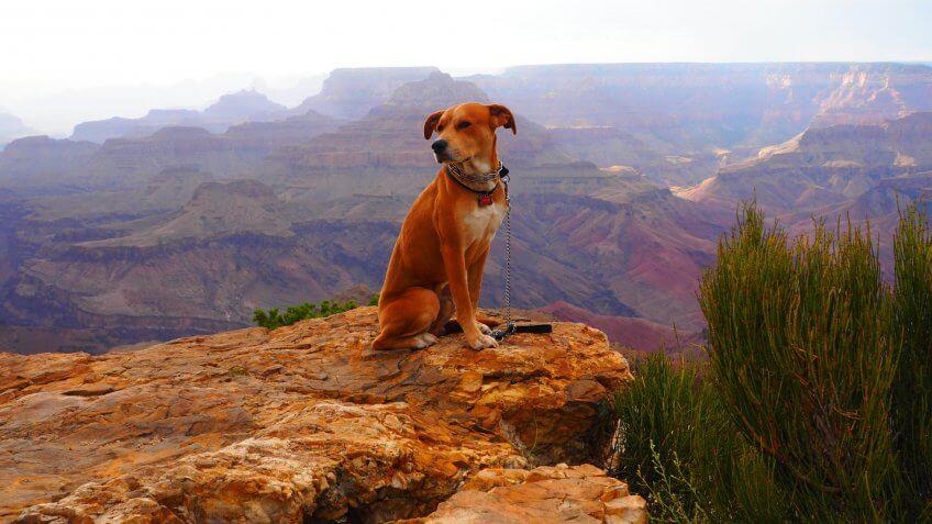 dog at Grand Canyon.