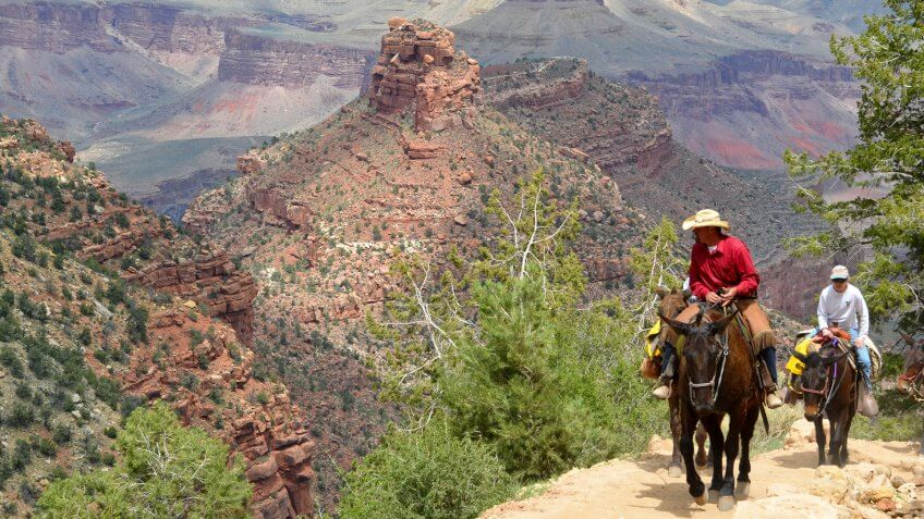 Guide leading mule riders up a steep portion of the Bright Angel Trail known as Heartbreak Hill.