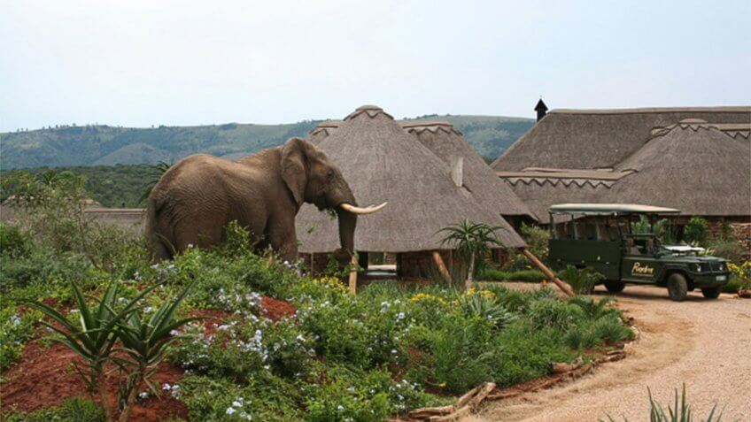 Pumba Water Lodge Elephants at the water lodge, South Africa.