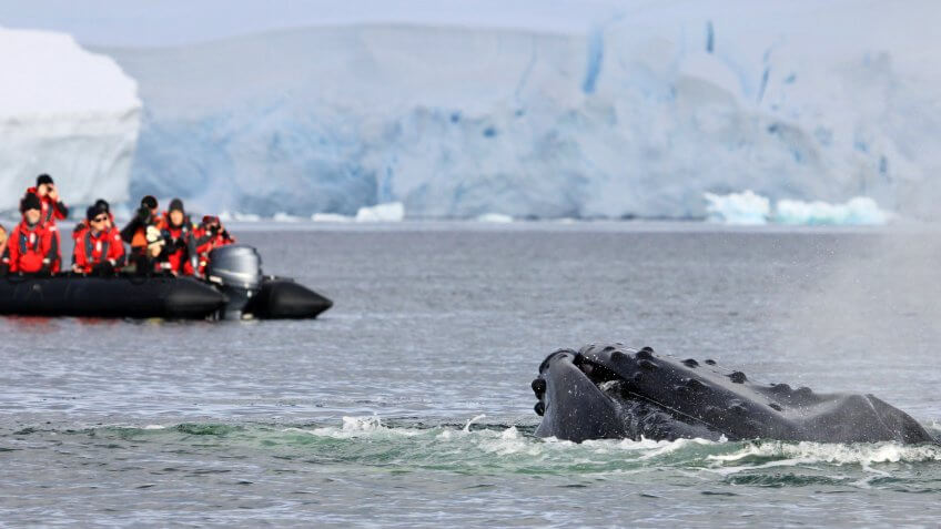 Humpback whale tail with ship, boat, showing on the dive, Antarctic Peninsula.