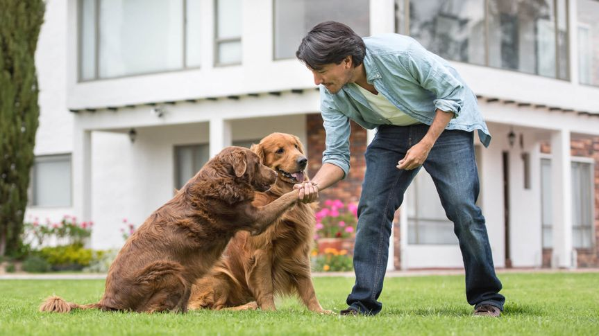 Man training dogs outdoors making them give him their paw - lifestyle.