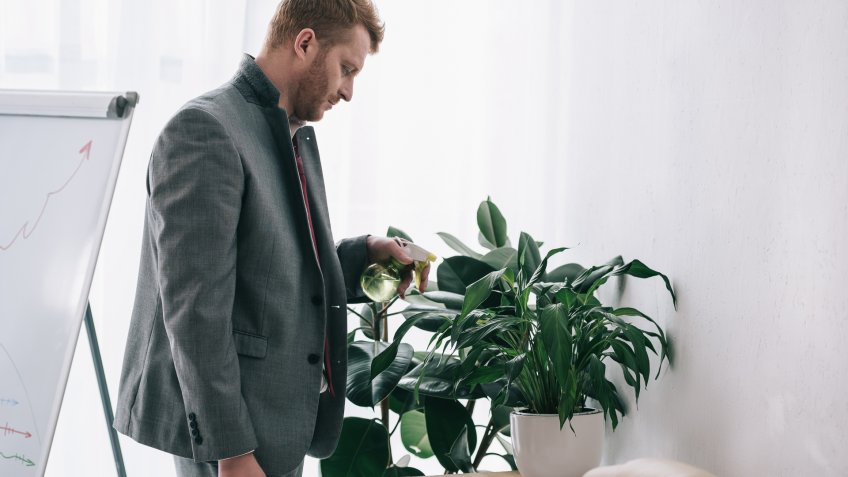 watering-office-plant