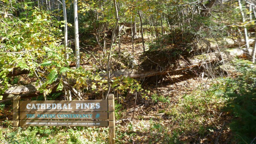 Cathedral Pines, Connecticut, Travel, destinations, hidden gems, travel destination