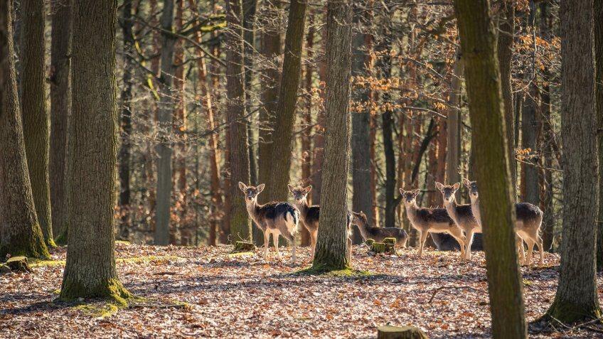 hunting preserve