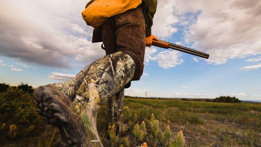 pheasant-hunting-montana-grasslands