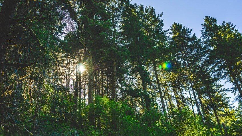 Forest, Oregon, Sun, trees