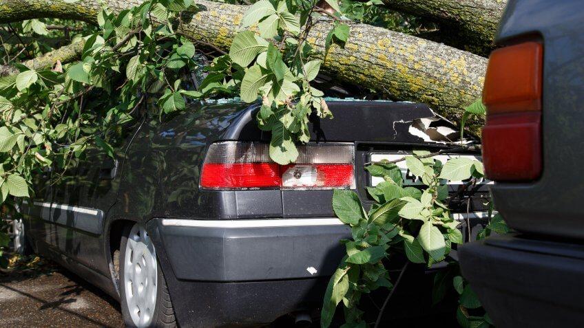 big-tree-fall-down-on-car