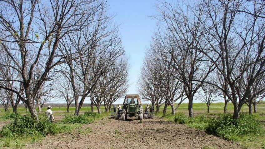 An Arrowhead Farms tractor pulls a contractor's specialized equipment that digs twin furrows 10 inches deep and buries a drip irrigation tube in each, between rows of pecan trees, during the installation of a micro irrigation system at Arrowhead Farms in Crystal City, TX, on March 29, 2010.