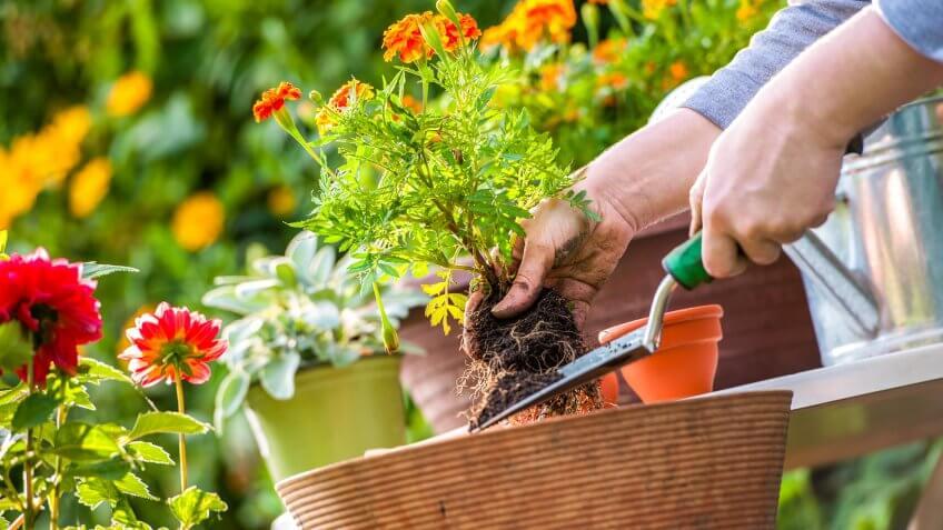 Plant-Garden
