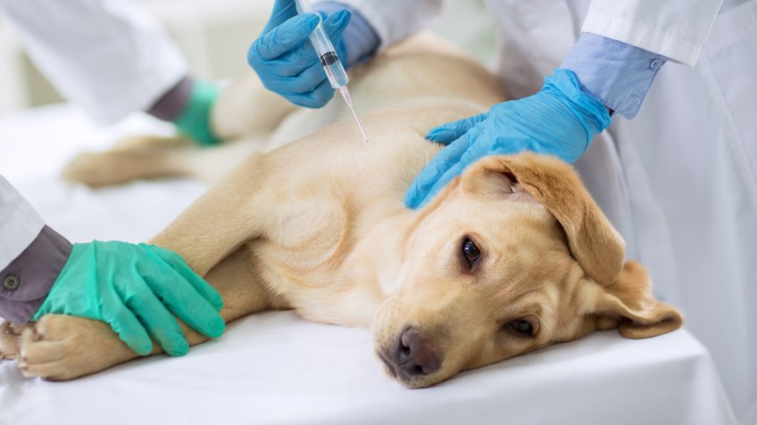 DOGS, dog, pet surgery