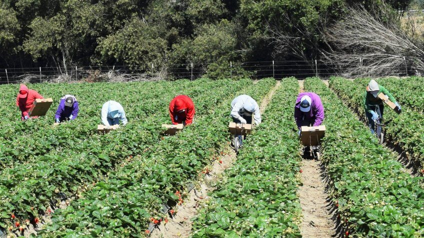 agriculture-workers