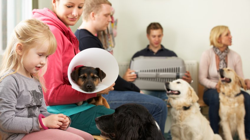 DOGS, dog, pet insurance