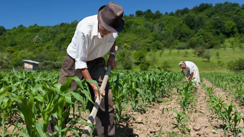 farm, farmer, farming, fields, sharecropper