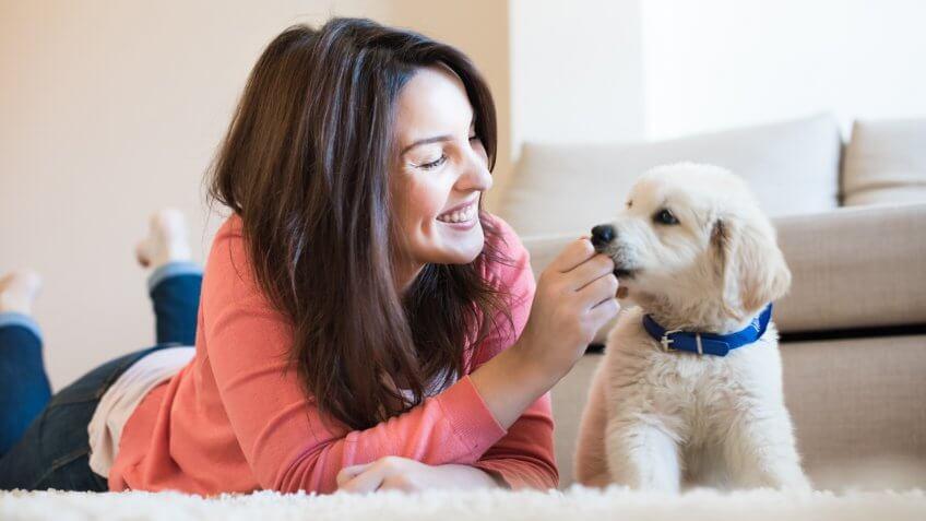 DOGS, dog, pet boarding