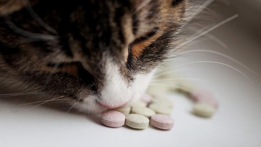 cat, cats, pet vitamins