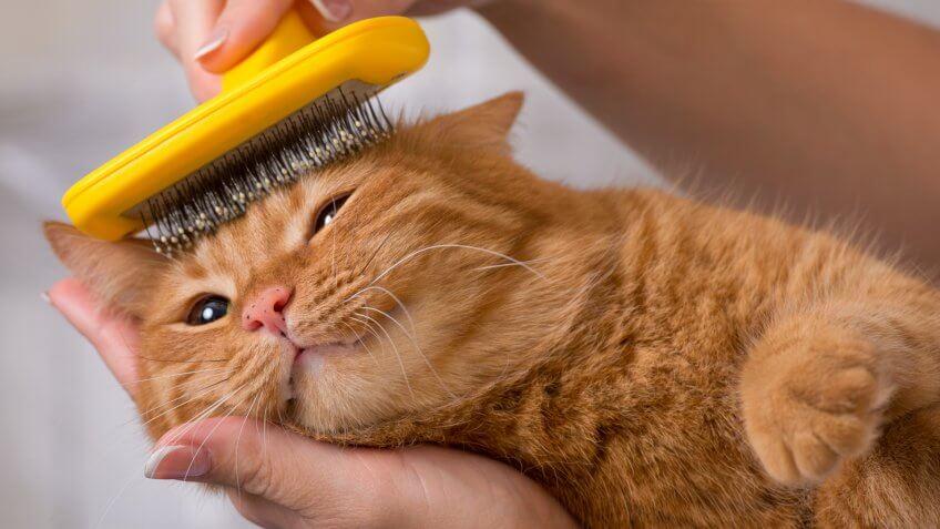 cat, cats, pet grooming