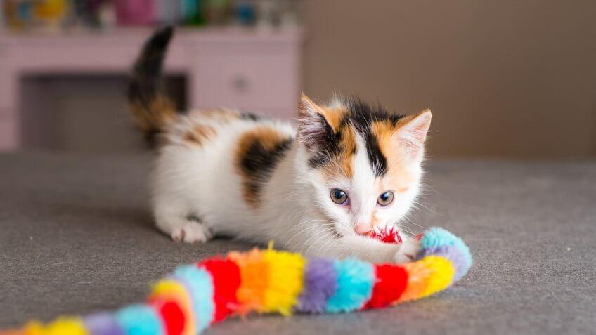 cat, cats, pet toys