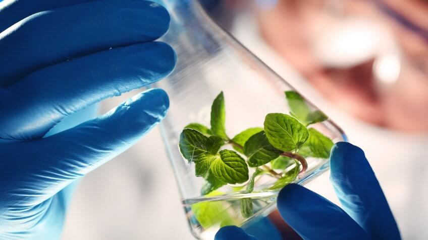Scientist holding and examining samples with plants.