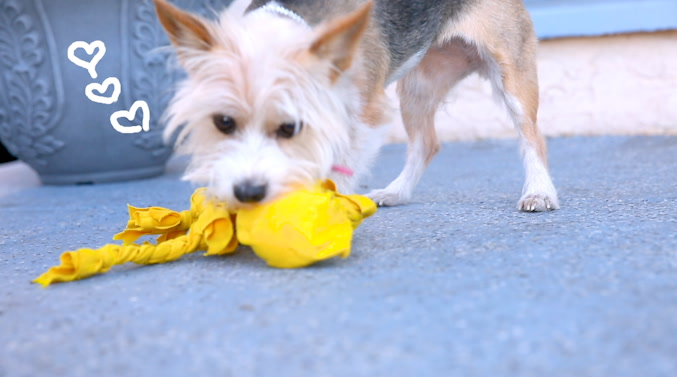 Your Playful Pup Will Love This Easy Diy Pet Toy Gobankingrates