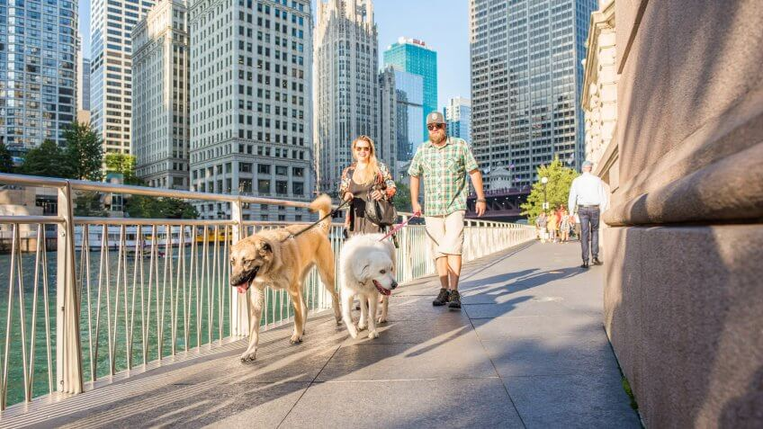 couple-walking-dogs-in-Chicago