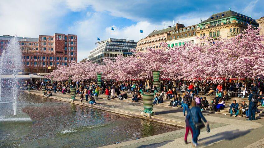Stockholm Sweden cherry trees