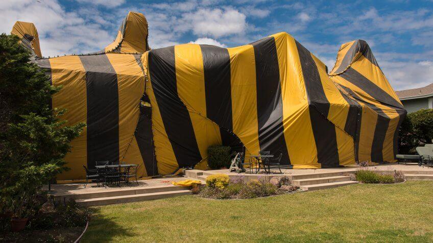 home-termite-tent