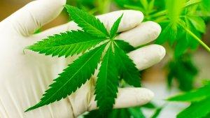 Marijuana Is Making These States Billions