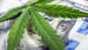 Seeing Green: How Much States Make From Cannabis