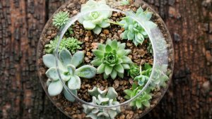 Make Your Own Eco (and Wallet) Friendly Terrarium