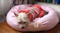 Craft This Easy DIY Dog Bed for Your Pampered Pup