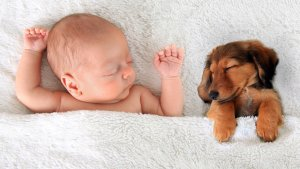 Buying a Dog Vs. Having a Kid: Cost Breakdown